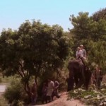 Prince-And-Me-4-Elephant-Adventure-2010-ScreenShot-34