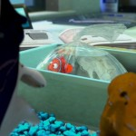 Finding-Nemo-2003--ScreenShot-60